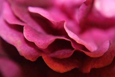 Photograph - Pink Petal by Sarah Boyd