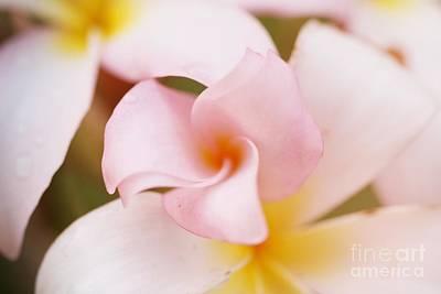 Photograph - Pink Petals by Audreen Gieger
