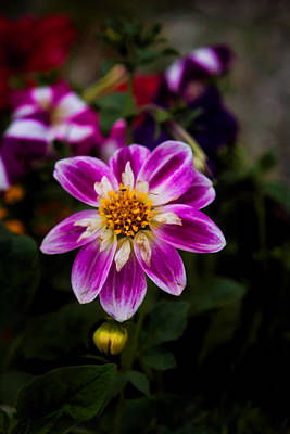 Photograph - Pink Petals by Cherie Duran