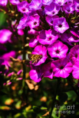 Photograph - Pink Petunias And Skipper Butterfly by Ms Judi