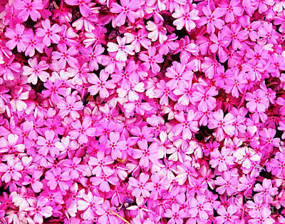 Photograph - Pink Pink And More Pink by Larry Oskin