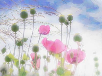 Pretty Pink Poppy Macro Photograph - Pink Poppies In A Paper Tissue Sky by Hal Halli