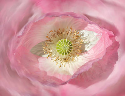 Photograph - Macro Pink Poppy Flower Abstract by Jennie Marie Schell