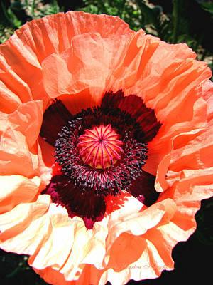 Art Print featuring the photograph Peach Poppy Perfection by Brooks Garten Hauschild