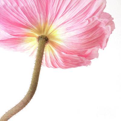 Blumen Photograph - Pink Poppy by Priska Wettstein