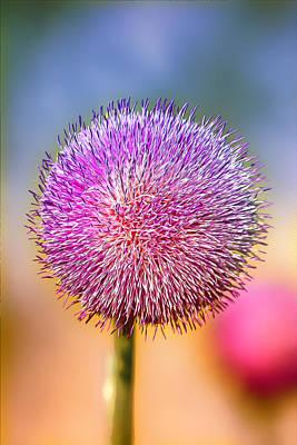 Weed Digital Art - Pink Power Puff by Bill Tiepelman