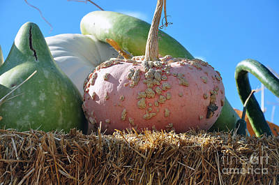 Photograph - Pink Pumpkin And Friends by Minnie Lippiatt