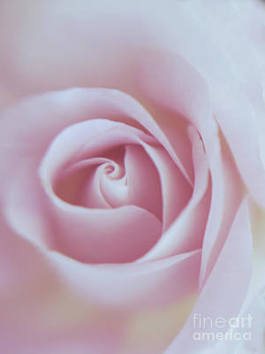 Pink Quartz Carved Rose Art Print by Irina WardasPink Rose Quartz Carved Rose