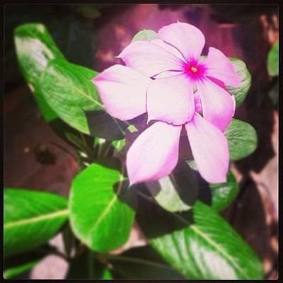 Botanical Photograph - Pink by Raimond Klavins