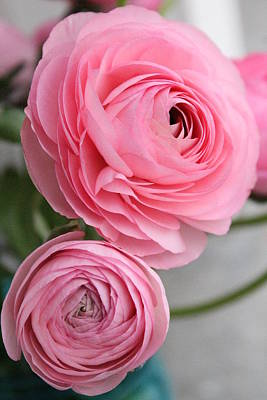 Andrea Grist Wall Art - Photograph - Pink Ranunculus Flower by Andrea K Grist