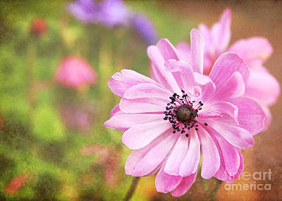 Duke Gardens Photograph - Pink Reflection by Emily Kay