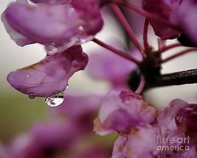 Susan Jones Photograph - Pink Reflections by Susan Jones
