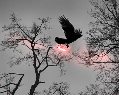 Crow Silhouette Photograph - Pink Ribbon Sky by Gothicrow Images