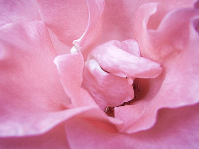 Photograph - Pink Romance by Roxy Hurtubise