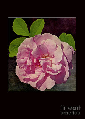 Photograph - Pink Rose Card by Dawn Gari