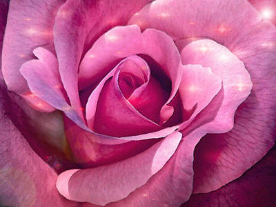 Digital Art - Pink Rose by Dennis Buckman
