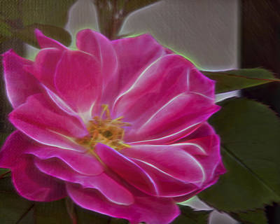 Photograph - Pink Rose Digital Art 2 by Walter Herrit