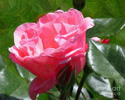 Photograph - Pink Rose  by Donna Cavanaugh