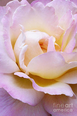 Art Print featuring the photograph Pink Rose Forming by Paul Clinkunbroomer
