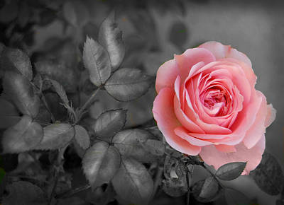 Black And White Photograph - Pink Rose by Gina Dsgn