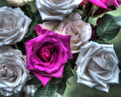 Hager Wall Art - Photograph - Pink Rose Hdr Creative by Greg Hager