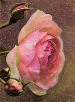 Pink Rose Imp 1 - Artistic Pink Rose With Buddies Art Print