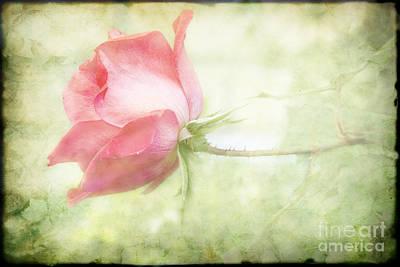 Pink Rose Art Print by Joan McCool