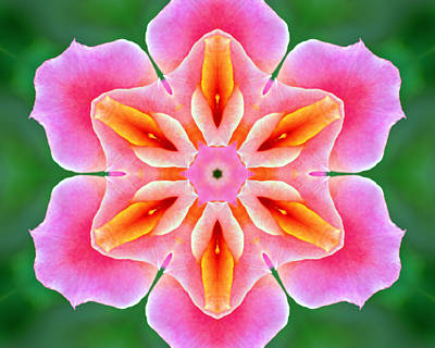 Photograph - Pink Rose Kaleidoscope by Bill Barber