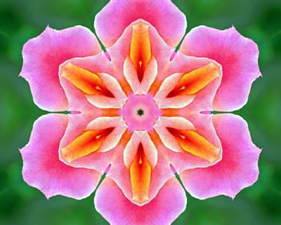 Photograph - Pink Rose Kaleidoscope by Bill Barber