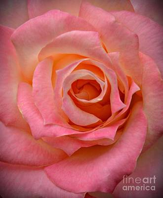 Photograph - Pink Rose Macro by Chalet Roome-Rigdon