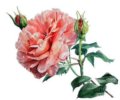 Painting - Pink Rose Odette  by Greta Corens