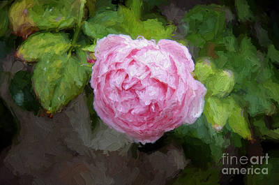 Photograph - Pink Rose Painterly by Andee Design