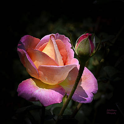Photograph - Pink Rose Petals And Drops by Julie Palencia