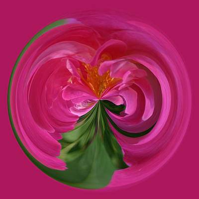 Photograph - Pink Rose Series 112 by Jim Baker