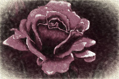 Digital Art - Pink Rose by Terry Cork