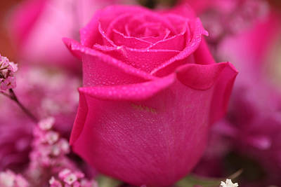 Photograph - Pink Rose With Raindrops by Sheila Kay McIntyre