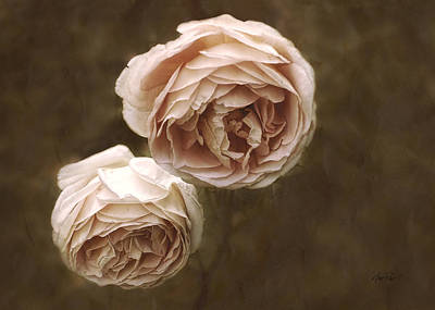 Photograph - Pink Roses by Ann Powell