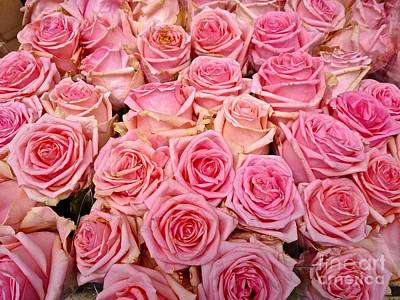 Photograph - Pink Roses by David Warrington