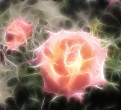 Pink Roses Digital Artwork Original