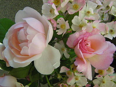 Flowers Photograph - Pink Roses by Kimberly-Ann Talbert