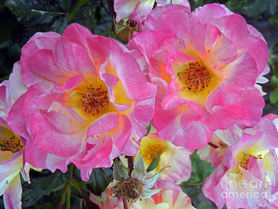 Photograph - Pink Roses by NightVisions