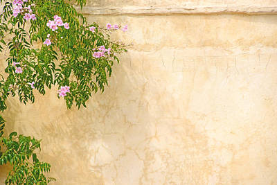 Flowers Photograph - Pink Roses On A Wall by Gry Thunes
