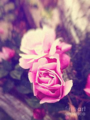 Photograph - Pink Roses by Silvia Ganora