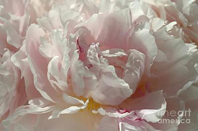 Photograph - Pink Ruffles by Sarah Schroder