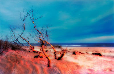 Pink Sands Blue Sky - Outer Banks I Art Print by Dan Carmichael