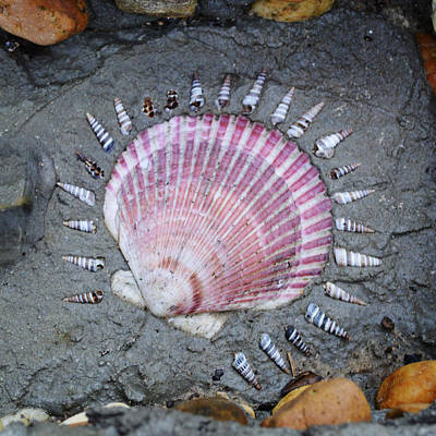 Photograph - Pink Seashell With Corona by rd Erickson