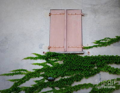 Pink Shutters And Green Vines Art Print by Lainie Wrightson