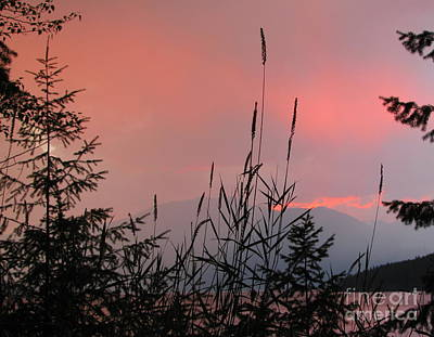 Photograph - Pink Sky And Grasses by Leone Lund