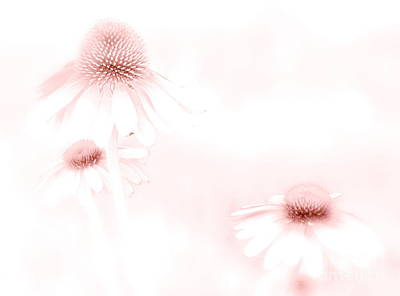 Pink Sonata  Art Print by Andrea Kollo