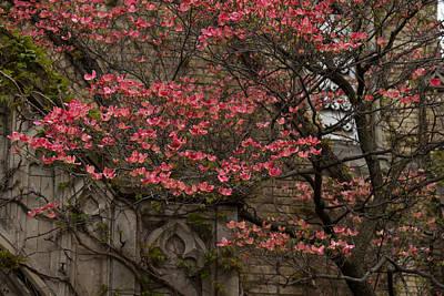 Photograph - Pink Spring - Dogwood Filigree And Lace by Georgia Mizuleva